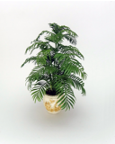 12th scale bushy Kentia Palm