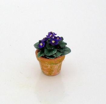 African Violet - Saintpaulia - Click Image to Close